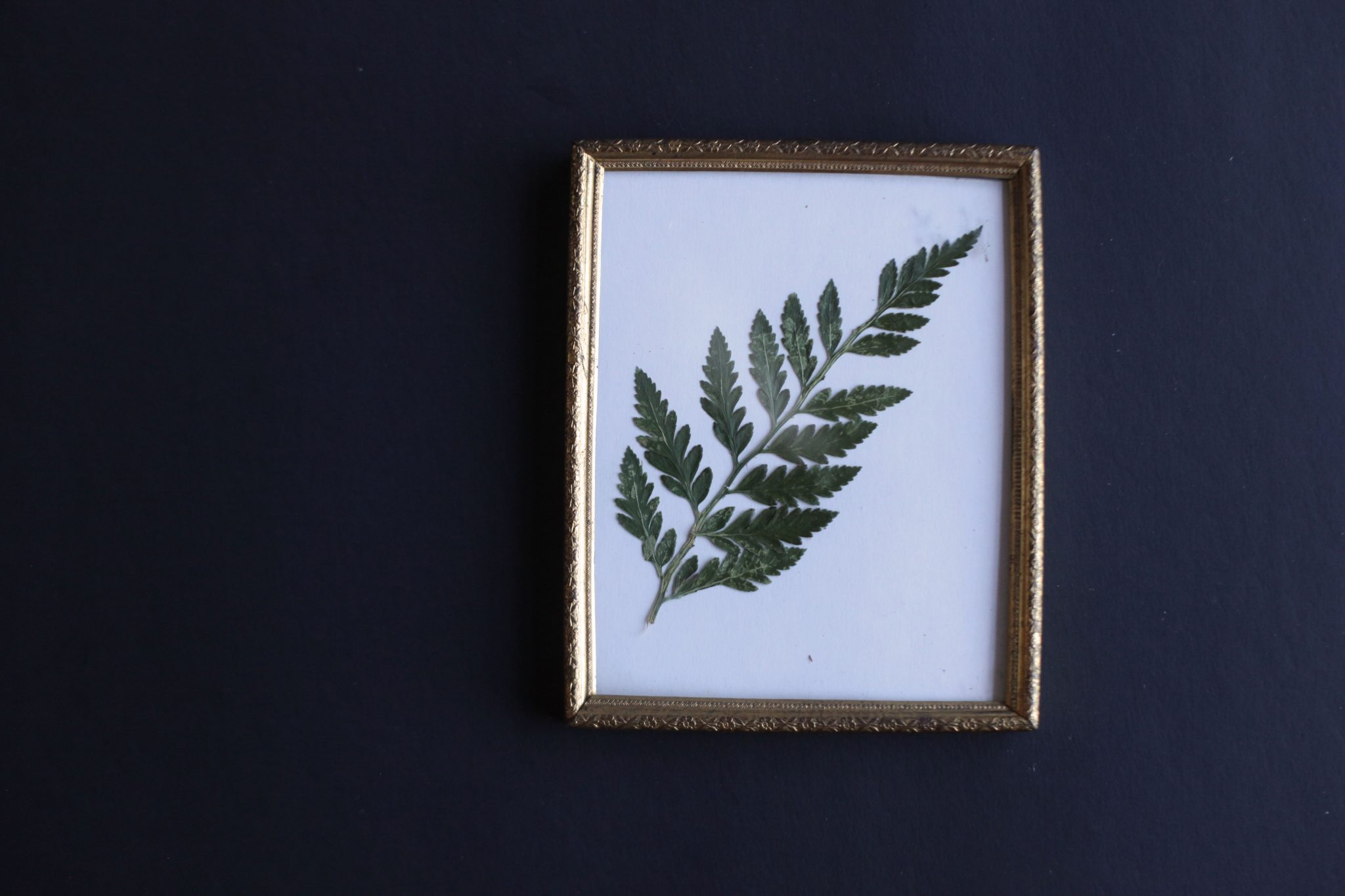 Pressed Fern DIY - Tastemaker Blog